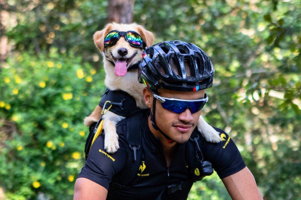 bike cachorros dogs