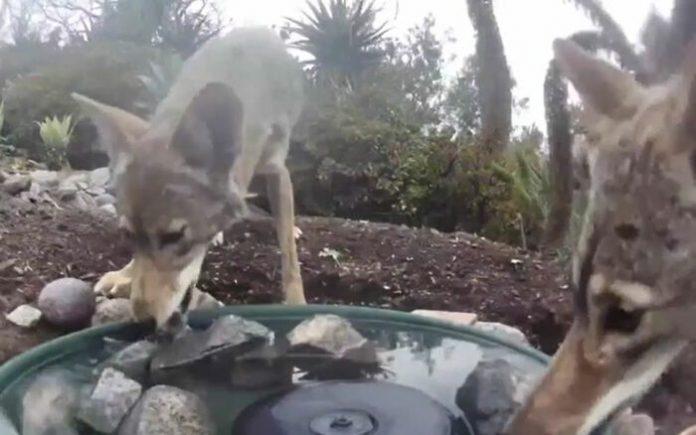Mulher coloca câmera em seu jardim e flagra mais de 10 animais; veja fotos