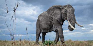 Os cinco melhores animais para fotografar