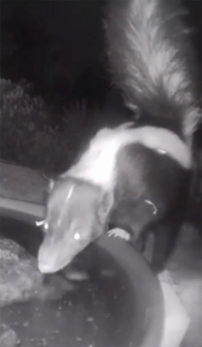 Mulher flagra animais em seu jardim