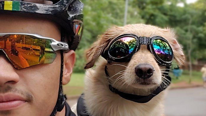 cachorro bike