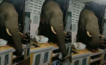 Elefante quebra parede da cozinha e rouba saco de arroz em casa da Tailândia; veja vídeo