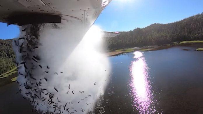 Vídeo: Peixes são jogados de avião para reabastecer lago dos EUA