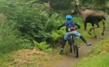 Vídeo: Alce quase atropela mountain biker em trilha