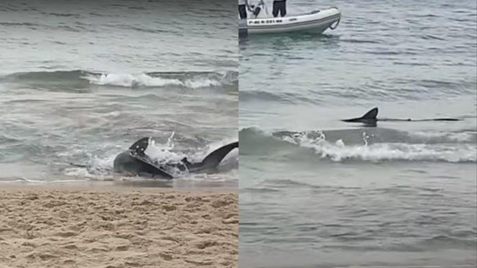 VÍDEO: Turistas fogem ao verem tubarão próximo à areia em praia da Espanha
