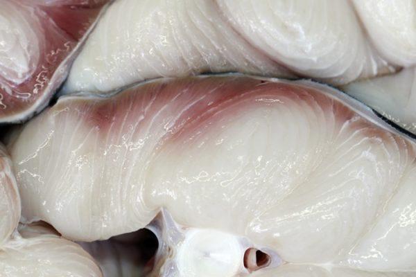 carne de tubarão