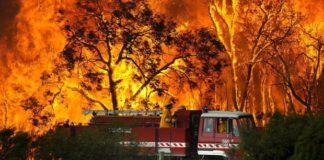 Cenário ambiental pode prolongar duração e intensidade de incêndios em áreas importantes para o ecossistema da Austrália