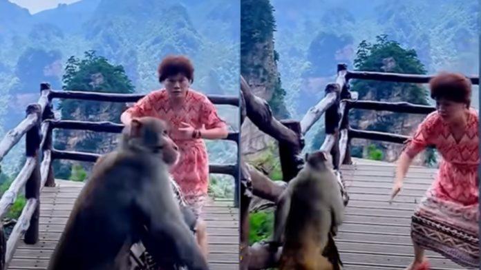 Vídeo: Macaco rouba bolsa de turista que dançava em parque da China