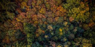 Um terço das árvores do mundo estão ameaçadas de extinção