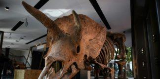 fóssil big john