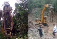 Homens encontram cobra gigante e usam trator para retirá-la de floresta