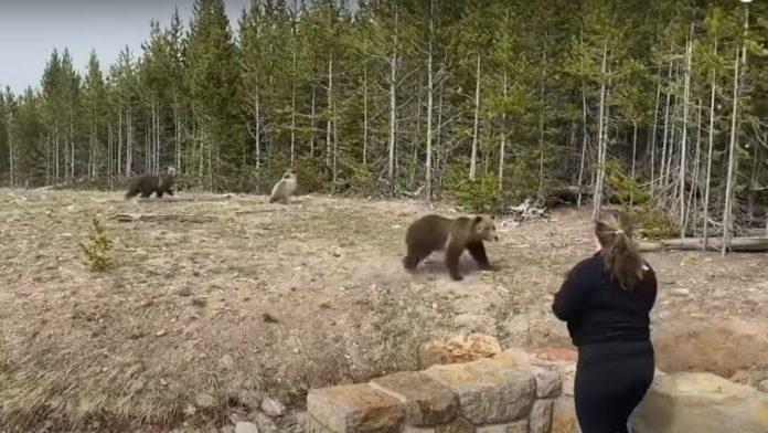 Mulher é presa por não manter distância de urso