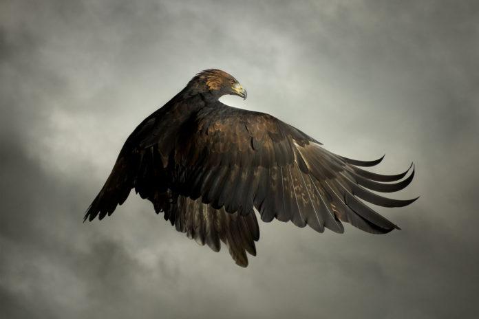 Mark Harvey exibe a beleza das aves em sua obra fotográfica