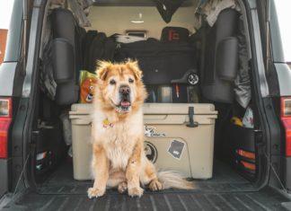 6 destinos para viajar com o seu cachorro pelo mundo